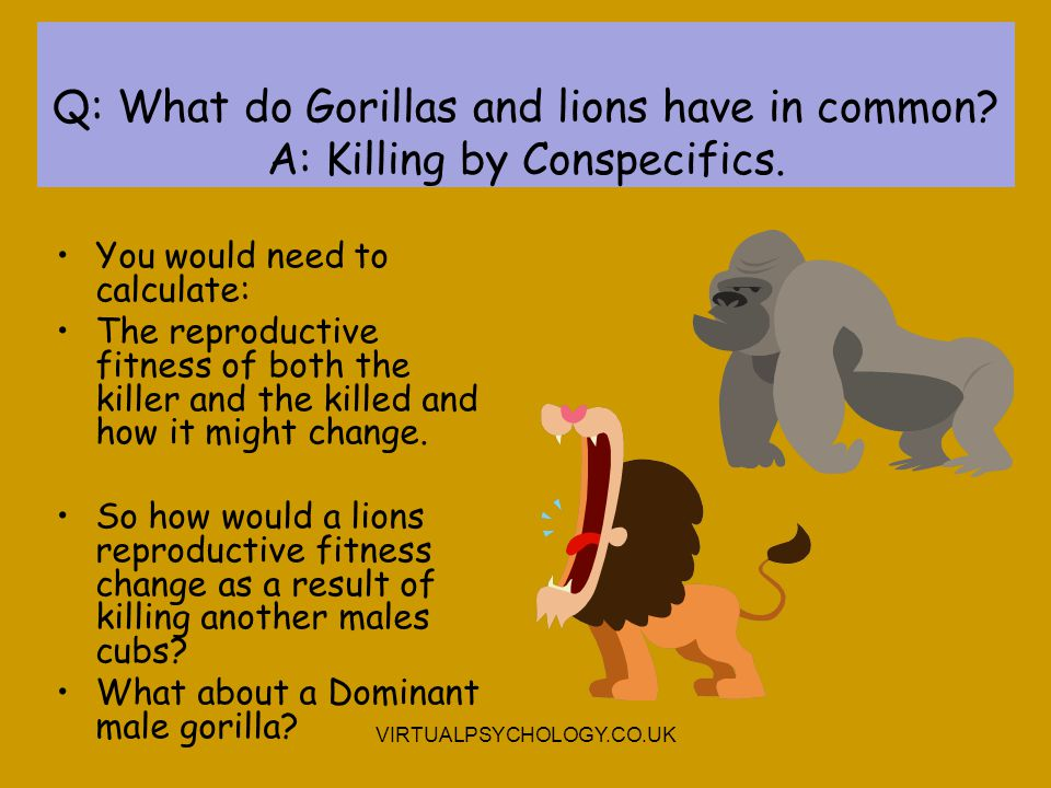 Q: What do Gorillas and lions have in common