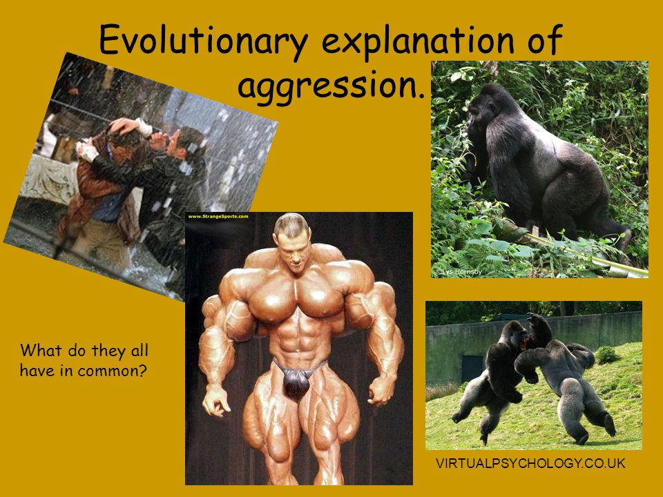 Evolutionary explanation of aggression.