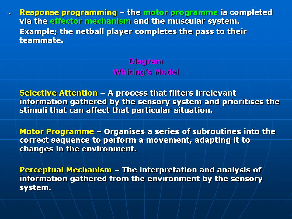 Response programming – the motor programme is completed via the effector mechanism and the muscular system.