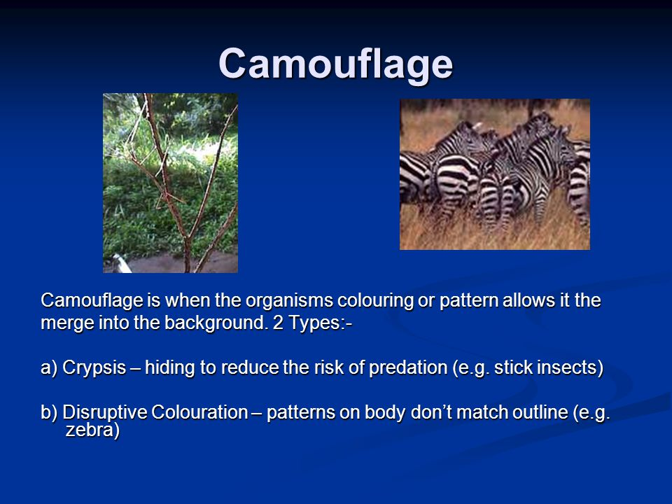Camouflage Camouflage is when the organisms colouring or pattern allows it the. merge into the background. 2 Types:-