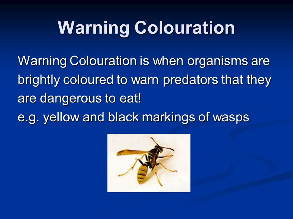 Warning Colouration Warning Colouration is when organisms are