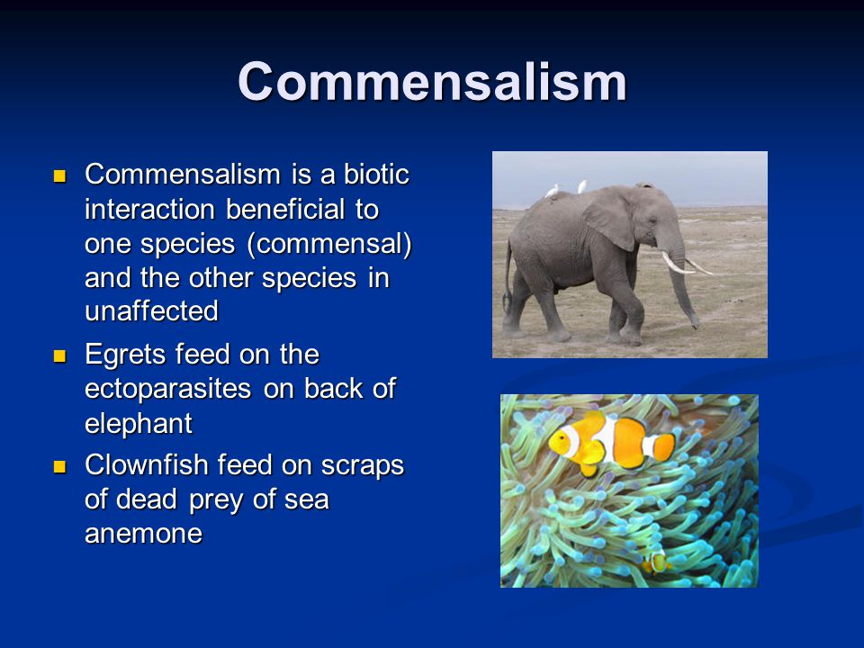 Commensalism Commensalism is a biotic interaction beneficial to one species (commensal) and the other species in unaffected.