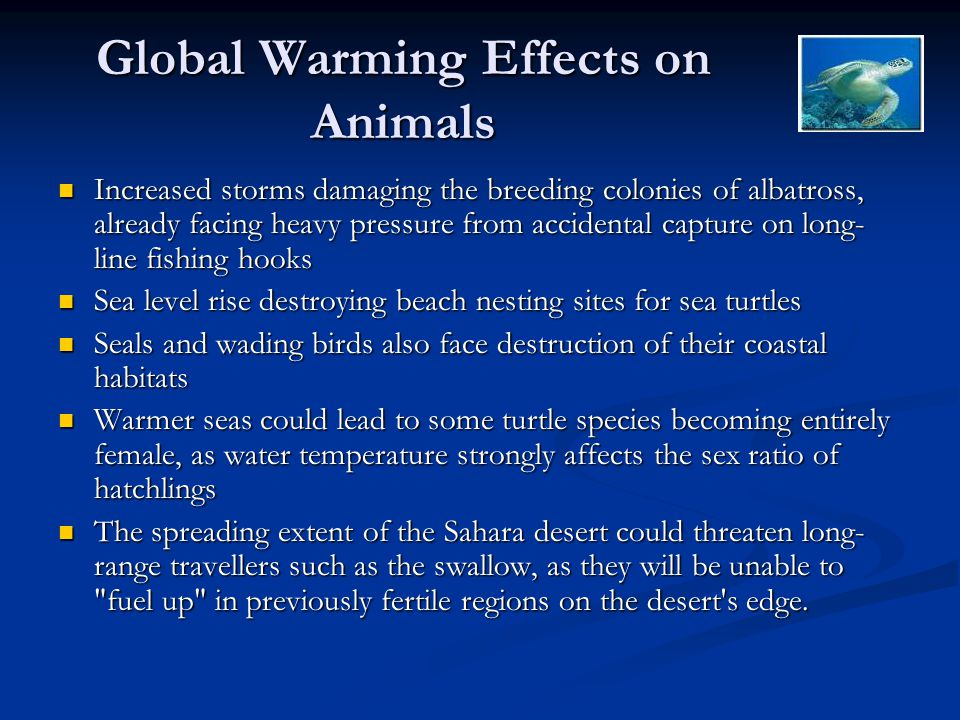 Global Warming Effects on Animals