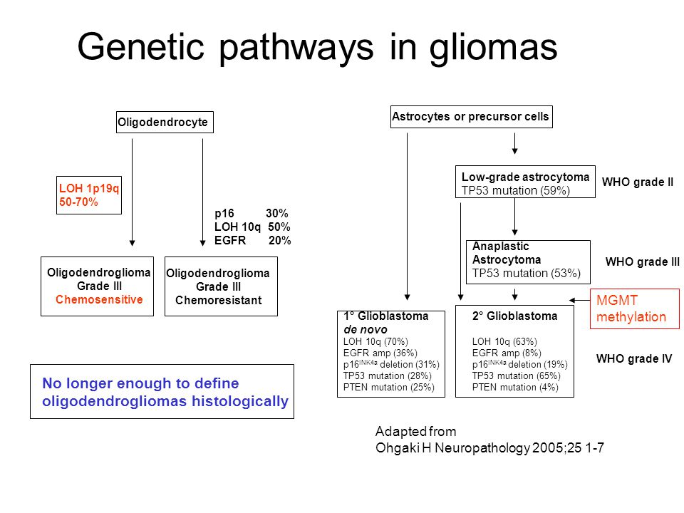 Genetic pathways in gliomas