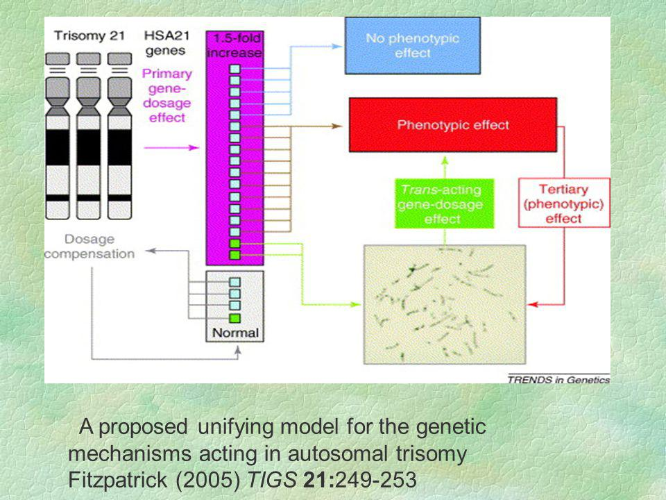 A proposed unifying model for the genetic mechanisms acting in autosomal trisomy