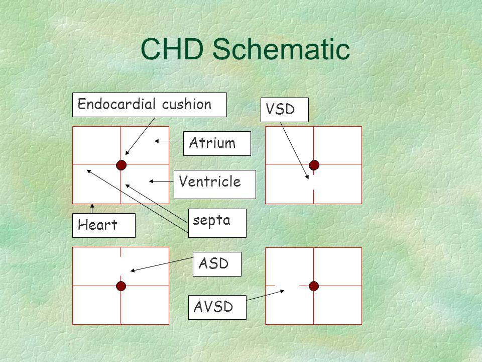 CHD Schematic Endocardial cushion VSD Atrium Ventricle septa Heart ASD