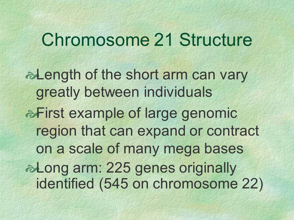 Chromosome 21 Structure Length of the short arm can vary greatly between individuals.