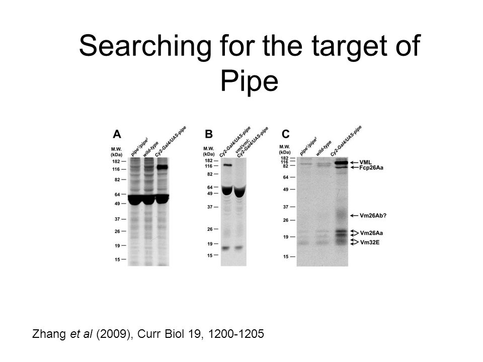 Searching for the target of Pipe