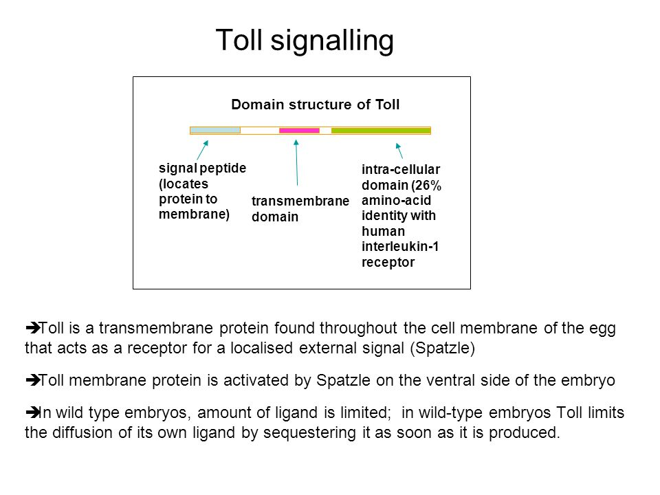 Toll signalling Domain structure of Toll. signal peptide. (locates protein to membrane)