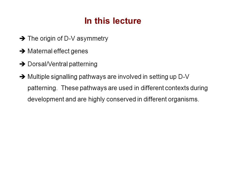 In this lecture The origin of D-V asymmetry Maternal effect genes