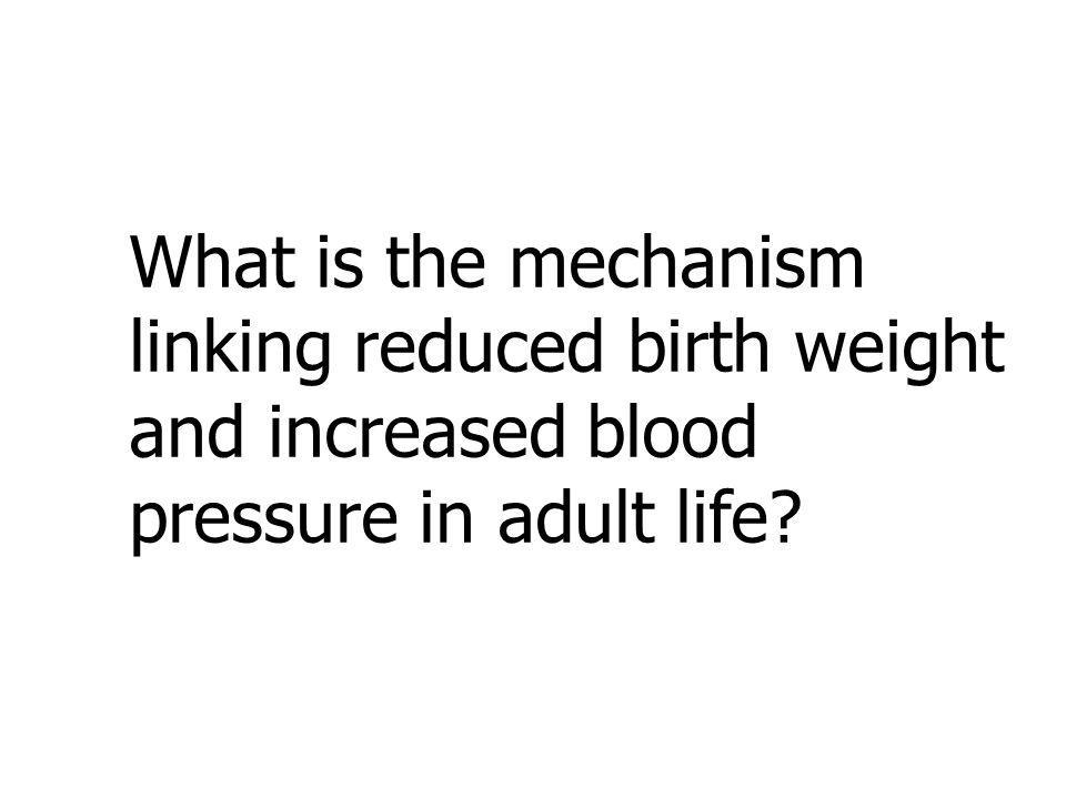 What is the mechanism linking reduced birth weight and increased blood pressure in adult life