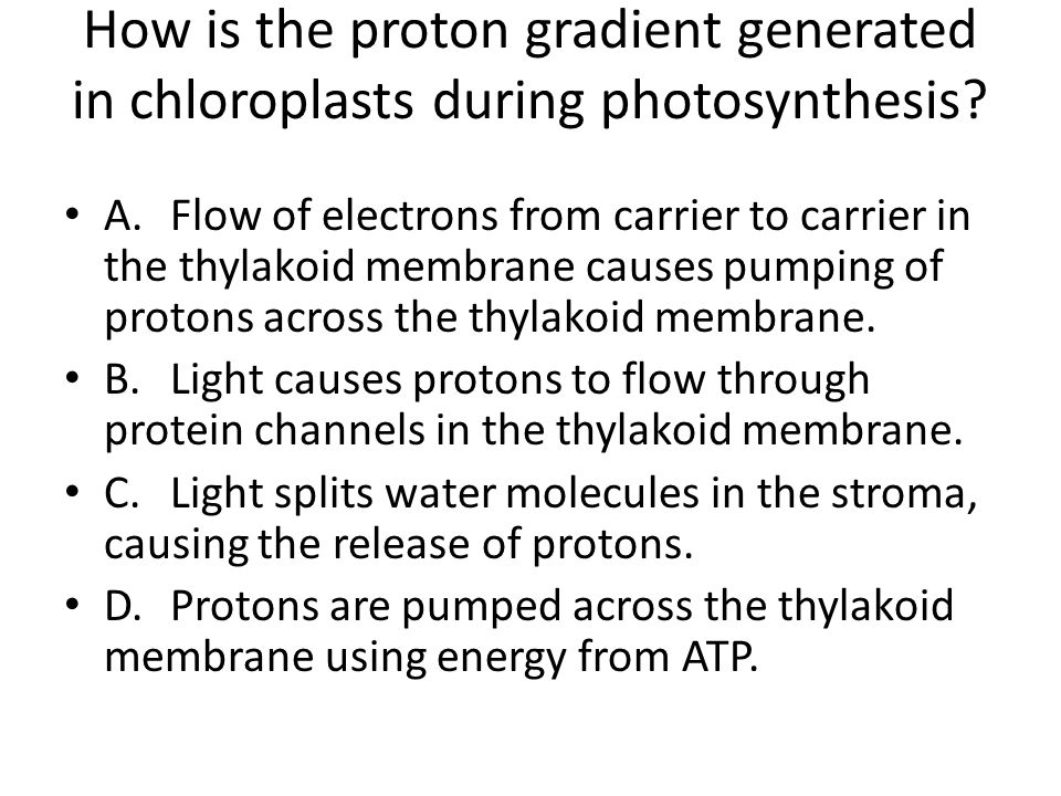 How is the proton gradient generated in chloroplasts during photosynthesis