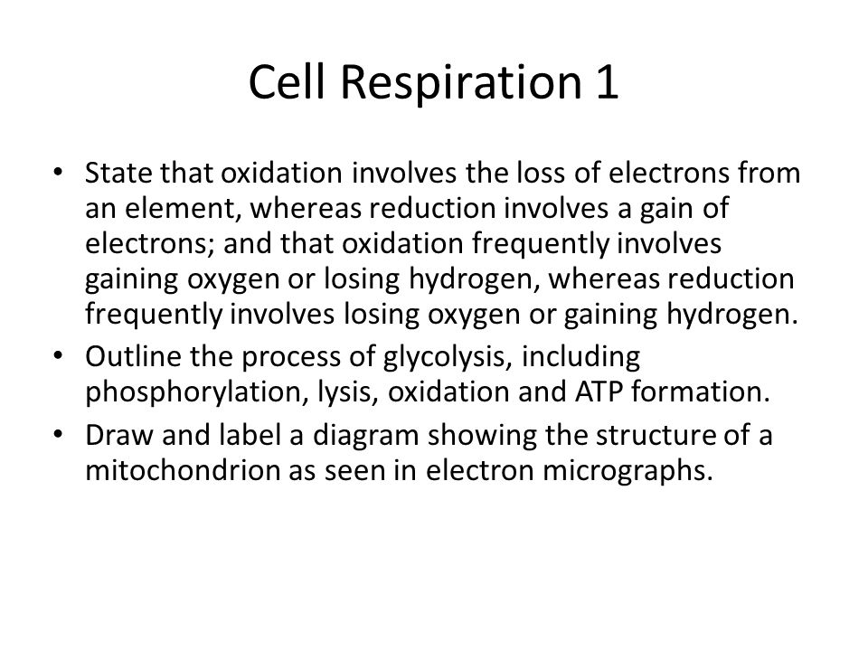 Cell Respiration 1