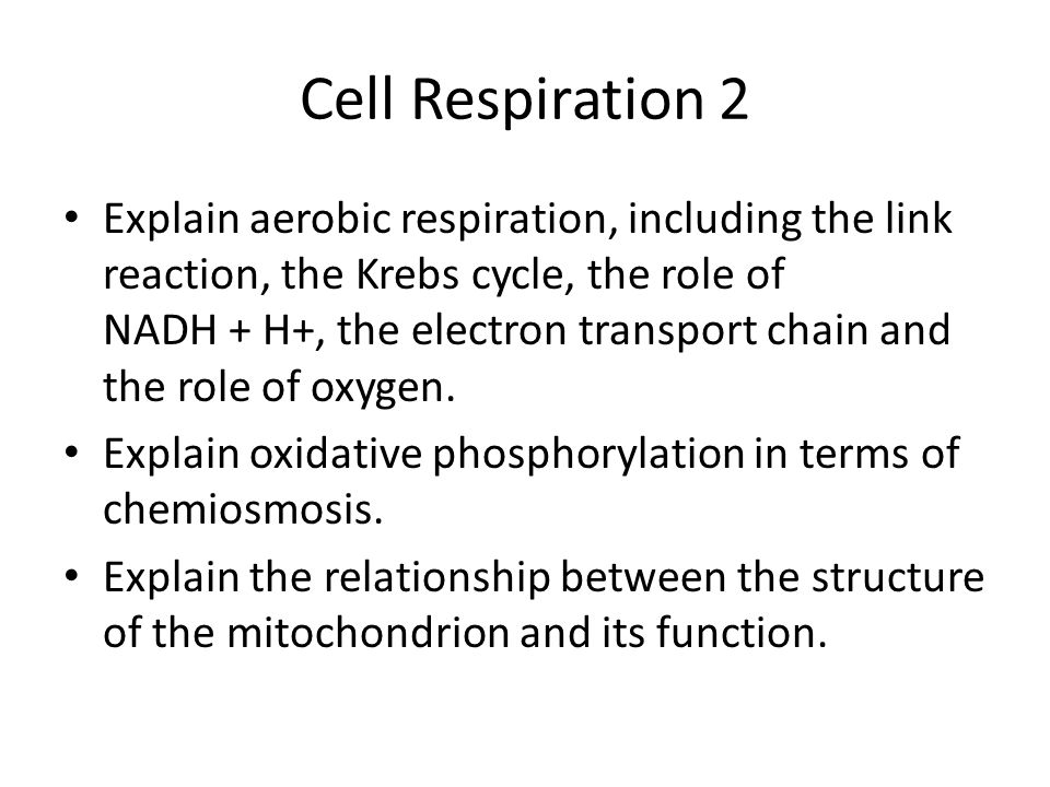 Cell Respiration 2