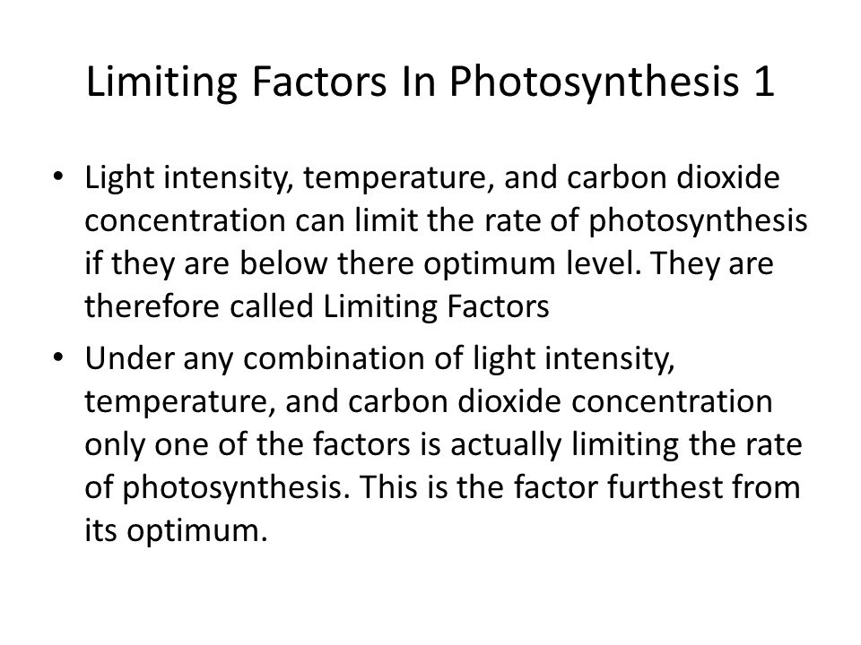 Limiting Factors In Photosynthesis 1