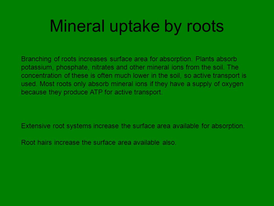 Mineral uptake by roots