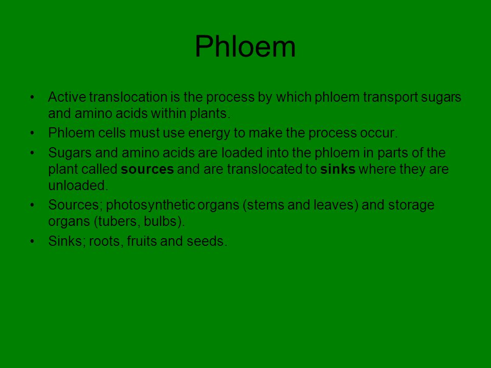 Phloem Active translocation is the process by which phloem transport sugars and amino acids within plants.