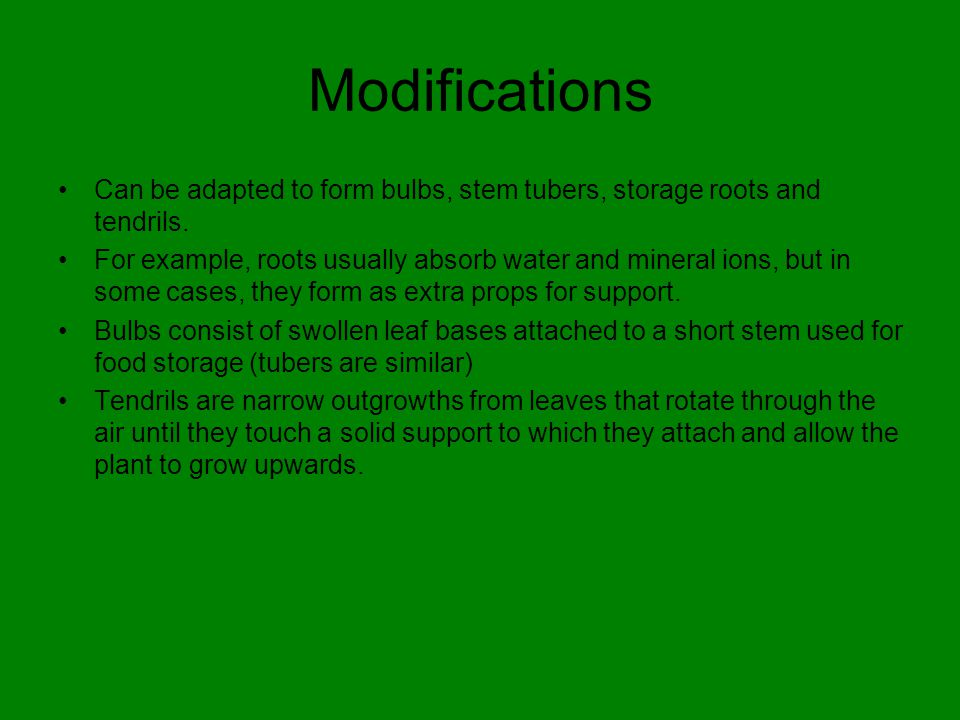 Modifications Can be adapted to form bulbs, stem tubers, storage roots and tendrils.