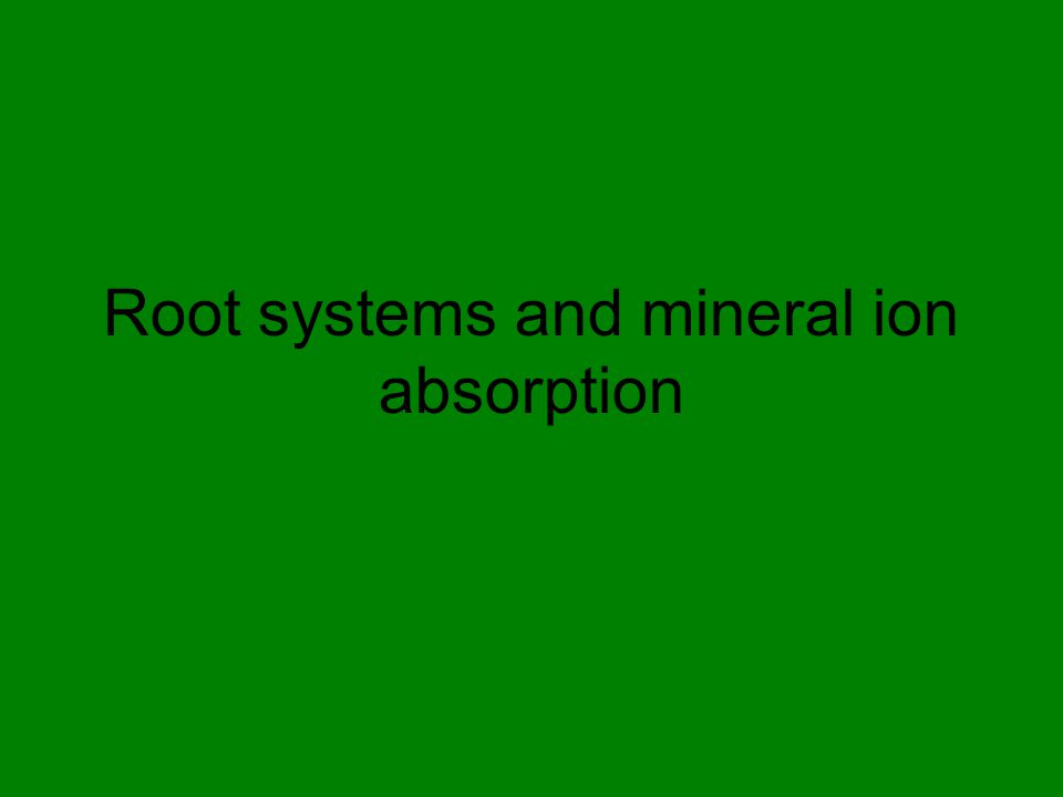 Root systems and mineral ion absorption