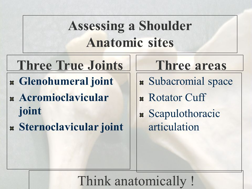 Assessing a Shoulder Anatomic sites