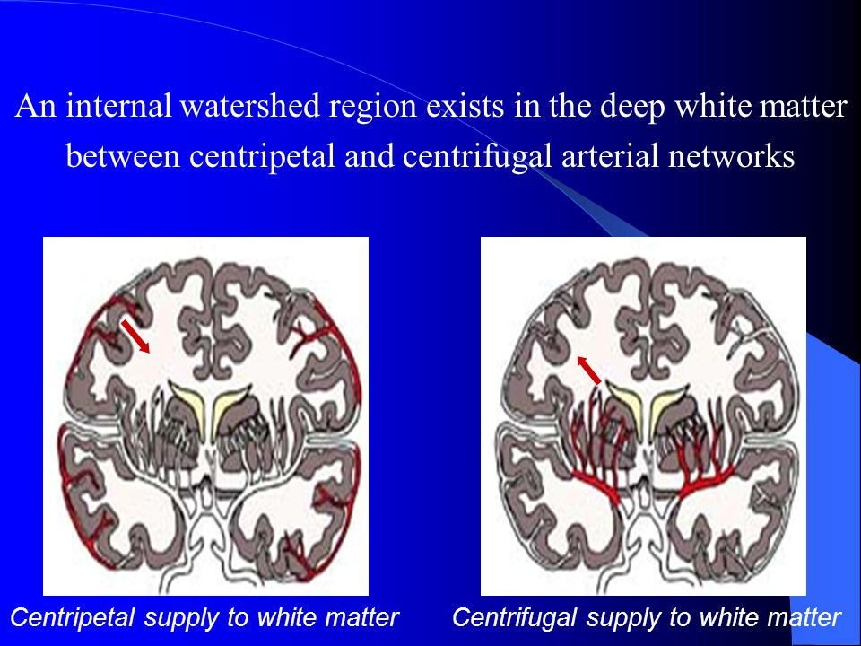An internal watershed region exists in the deep white matter
