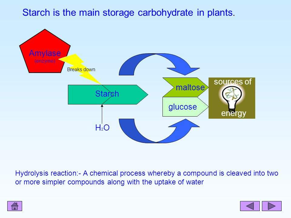 Starch is the main storage carbohydrate in plants.