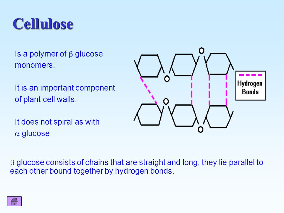 Cellulose Is a polymer of  glucose monomers.