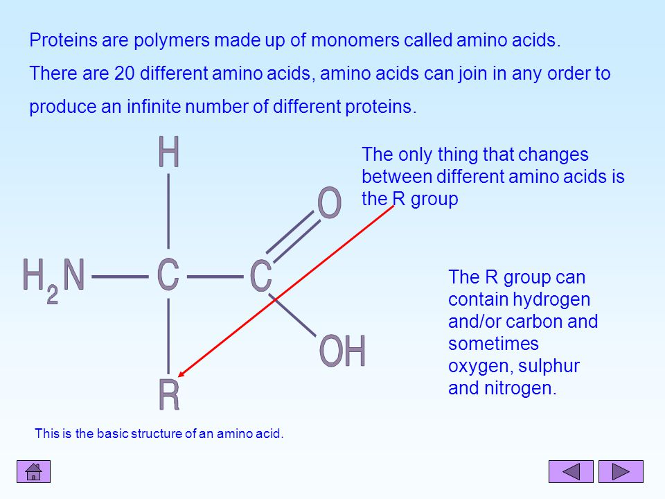 Proteins are polymers made up of monomers called amino acids.