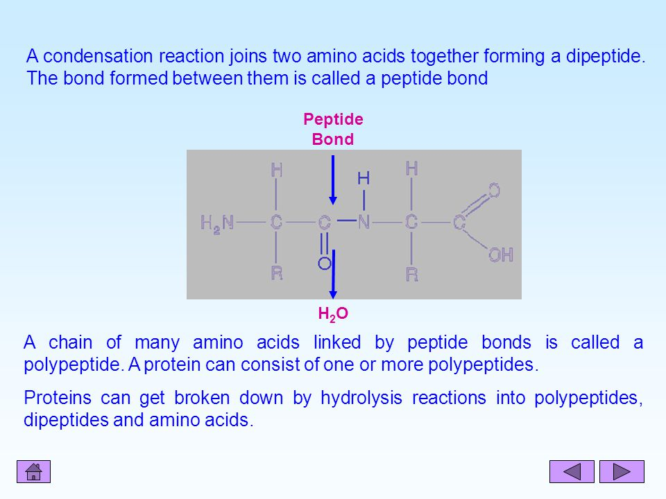 A condensation reaction joins two amino acids together forming a dipeptide. The bond formed between them is called a peptide bond