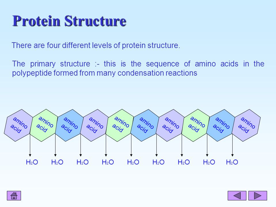 Protein Structure There are four different levels of protein structure.