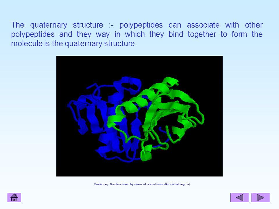 Quaternary Structure taken by means of rasmol (www.dkfz-heidelberg.de)