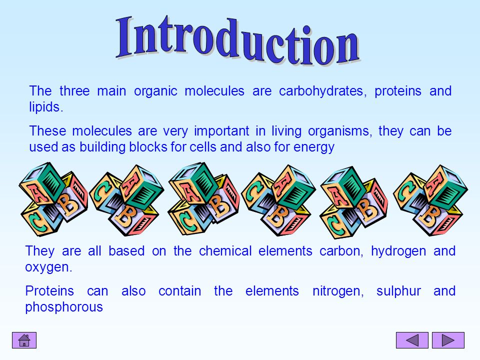 Introduction The three main organic molecules are carbohydrates, proteins and lipids.