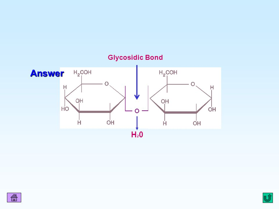 Q2 Glycosidic Bond Answer H20