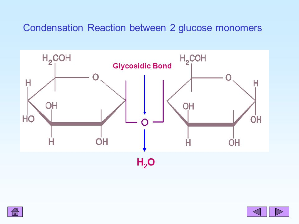 Condensation Reaction between 2 glucose monomers