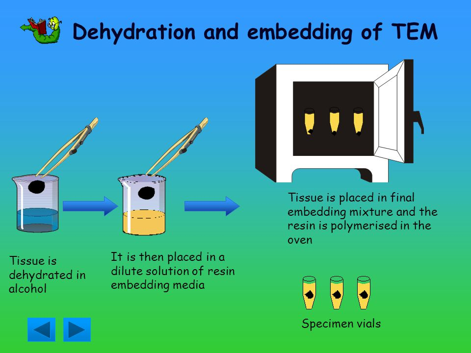 Dehydration and embedding of TEM