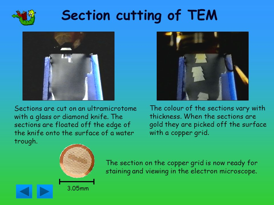 Section cutting of TEM