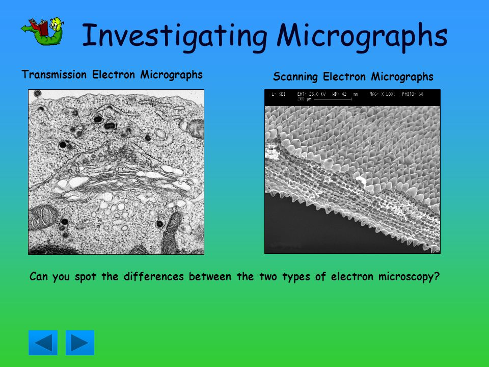 Investigating Micrographs