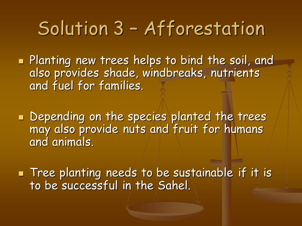 Solution 3 – Afforestation