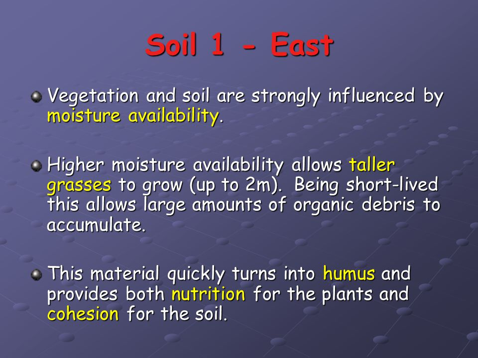 Soil 1 - East Vegetation and soil are strongly influenced by moisture availability.