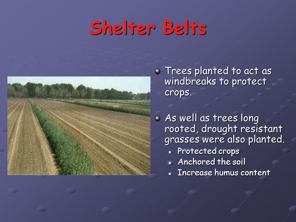 Shelter Belts Trees planted to act as windbreaks to protect crops.