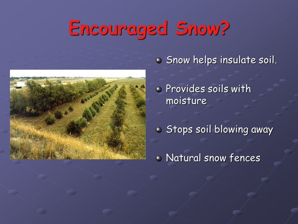 Encouraged Snow Snow helps insulate soil.