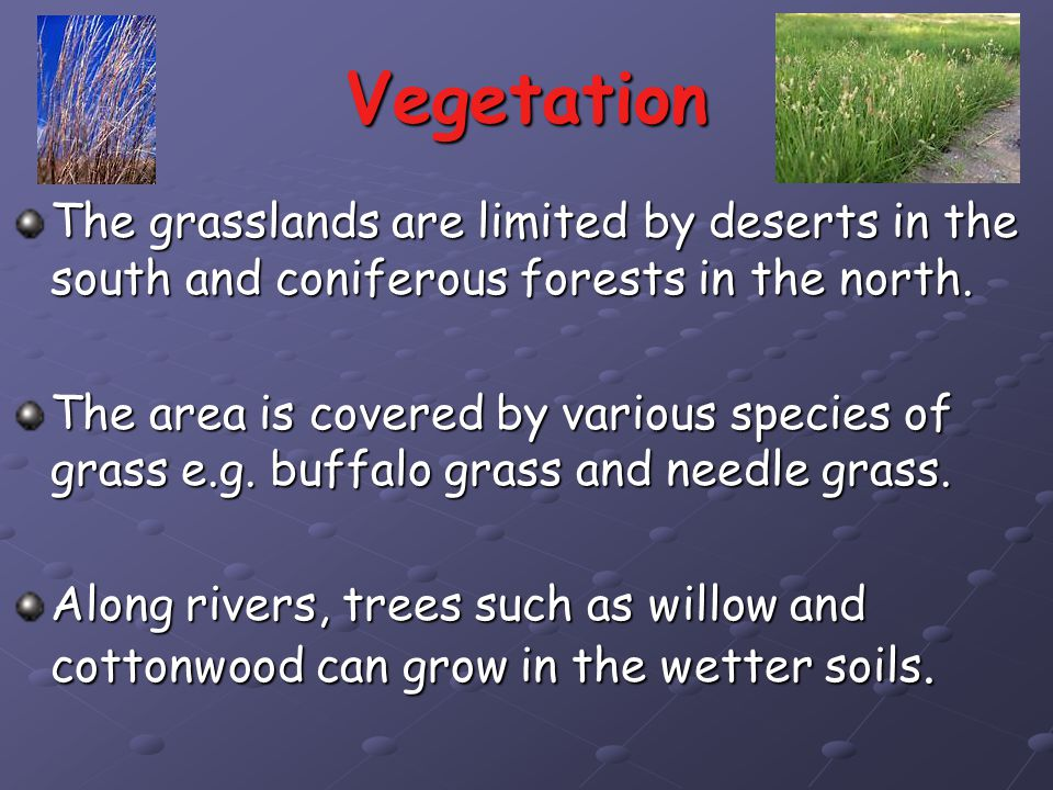 Vegetation The grasslands are limited by deserts in the south and coniferous forests in the north.