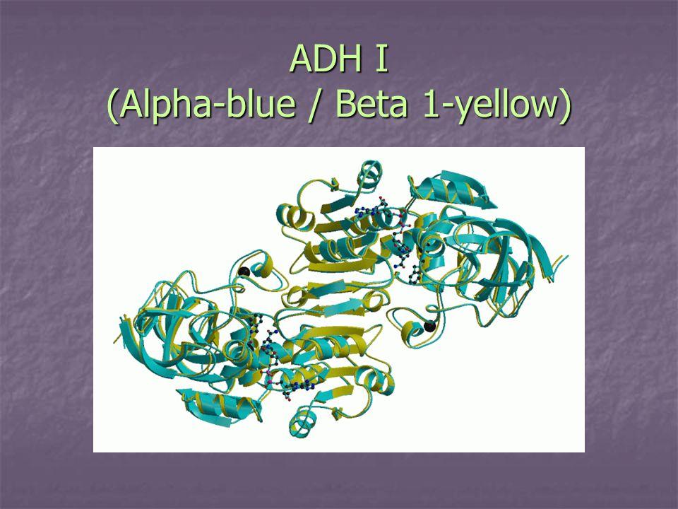 ADH I (Alpha-blue / Beta 1-yellow)