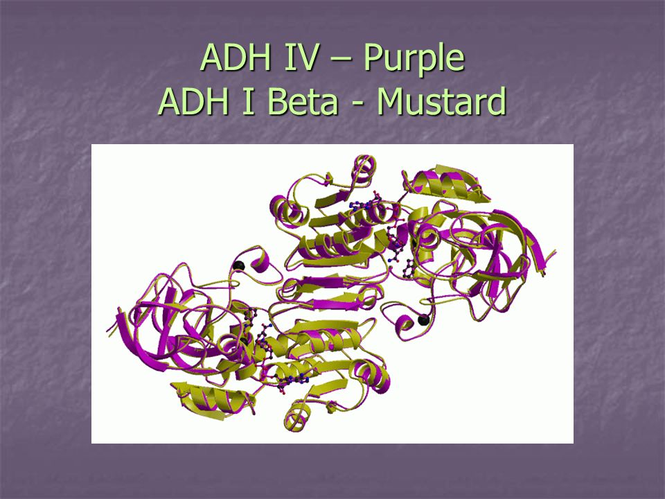 ADH IV – Purple ADH I Beta - Mustard