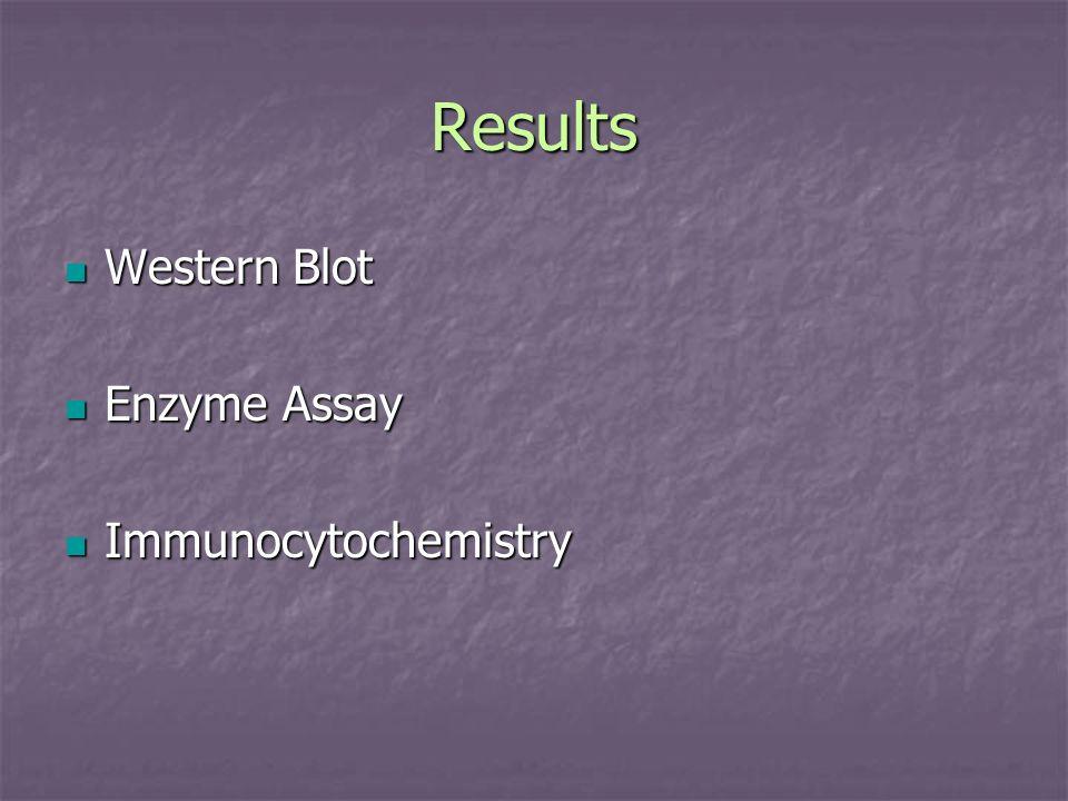 Results Western Blot Enzyme Assay Immunocytochemistry