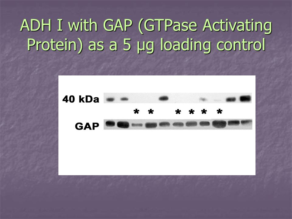 ADH I with GAP (GTPase Activating Protein) as a 5 µg loading control