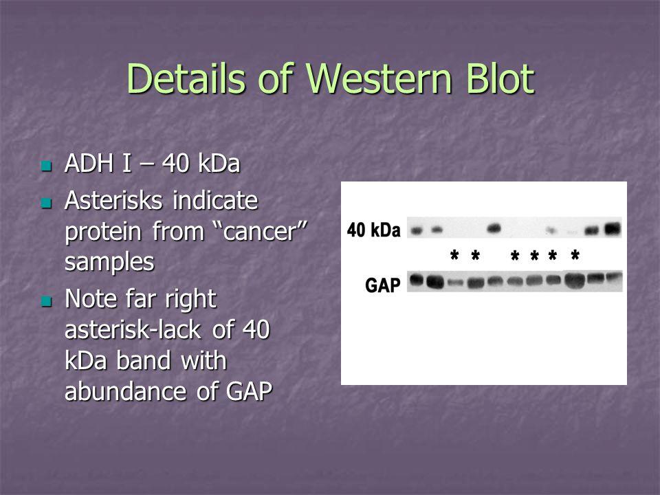 Details of Western Blot