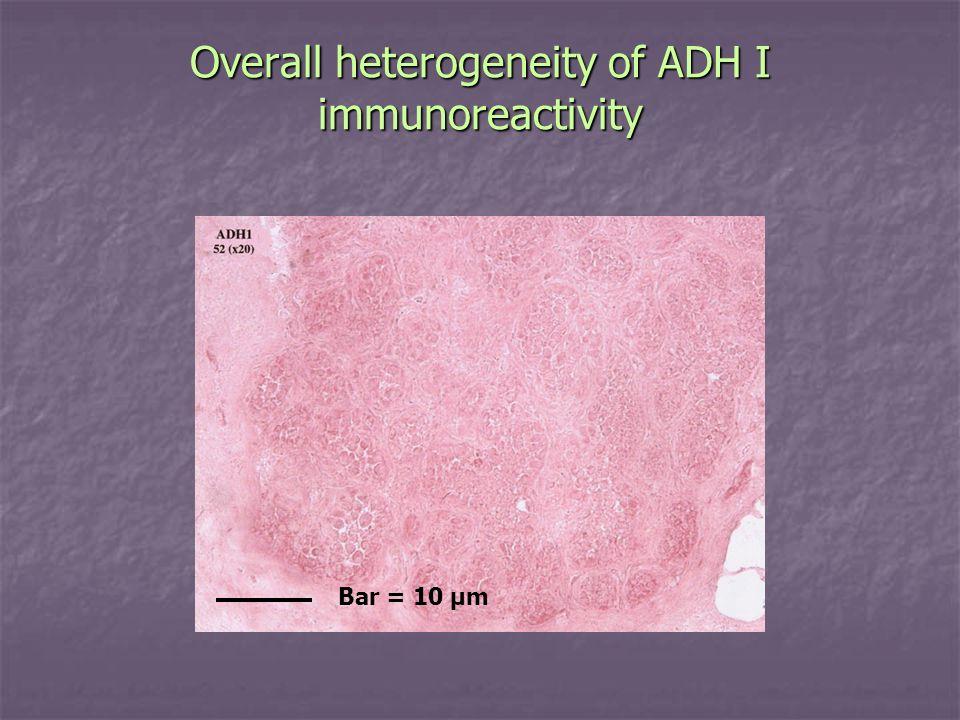 Overall heterogeneity of ADH I immunoreactivity