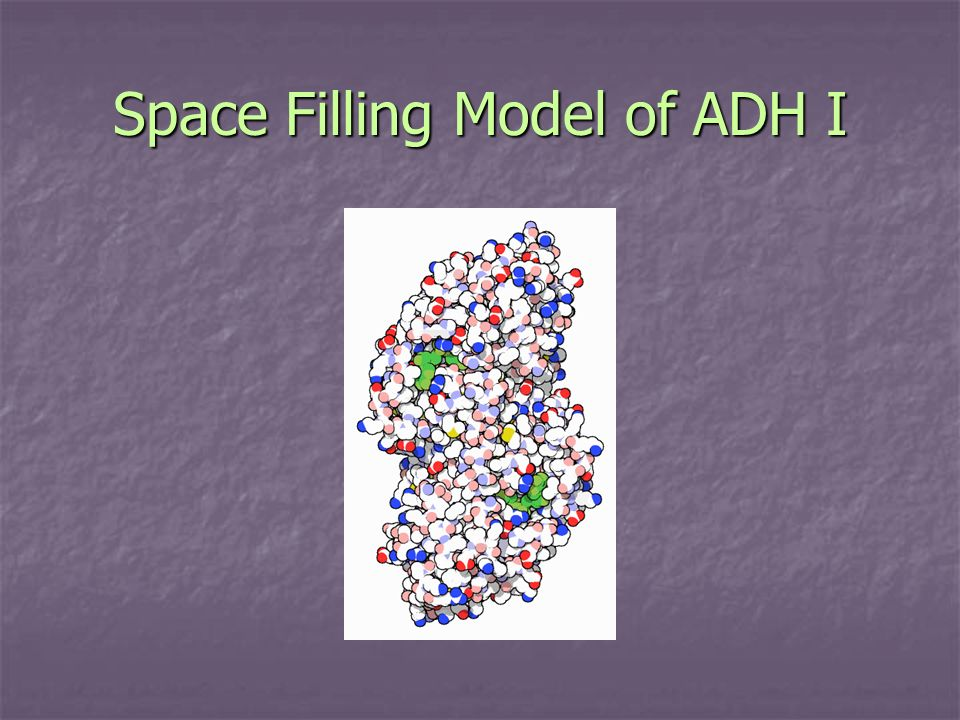 Space Filling Model of ADH I