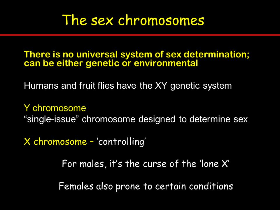The sex chromosomes There is no universal system of sex determination; can be either genetic or environmental.